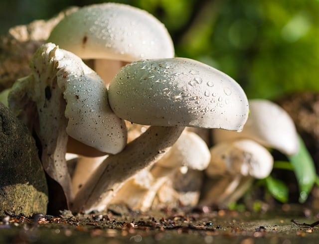 Beneficios de los hongos