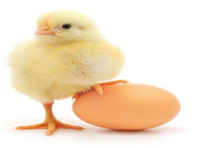 Conoce los alimentos con mayor cantidad de proteinas