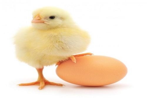 alimentos con mayor cantidad de proteinas