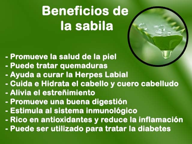 beneficios de la sabila