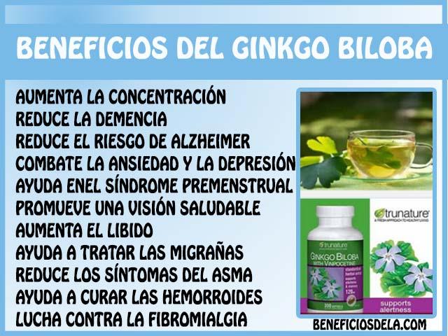 usos-del-ginkgo
