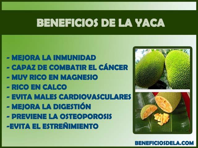 fruta noni beneficios e maleficios