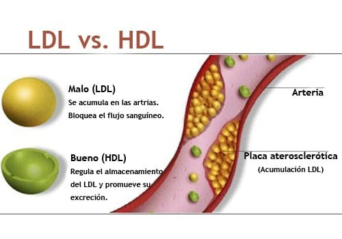 alimentos bajos en Colesterol y su importancia