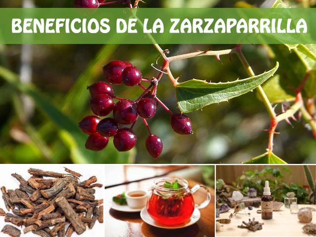 beneficios de la zarzaparrilla
