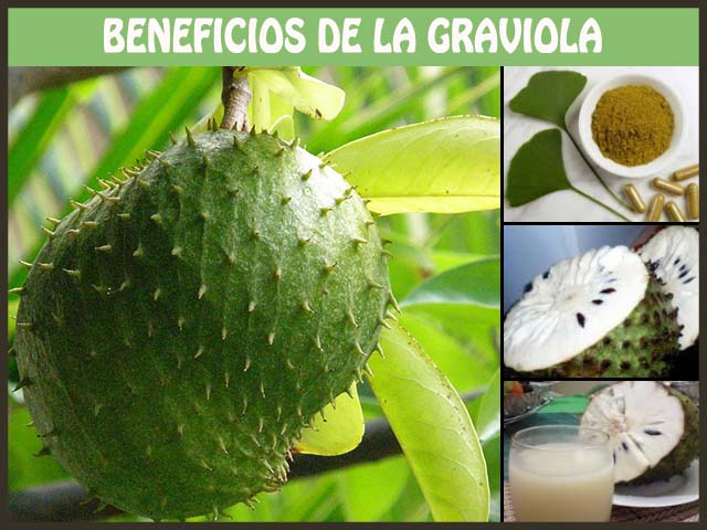 beneficios de la graviola