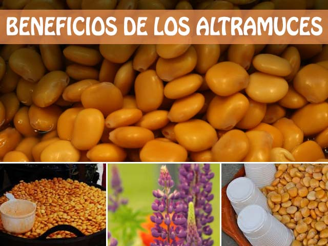 beneficios de los altramuces