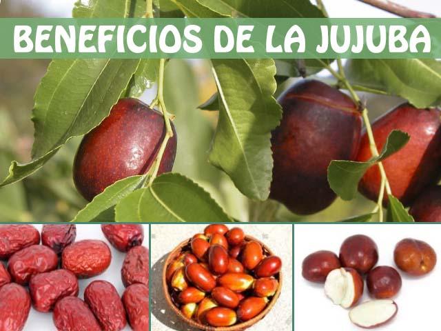 Beneficios del jujube y sus propiedades nutricionales muy sorprendentes