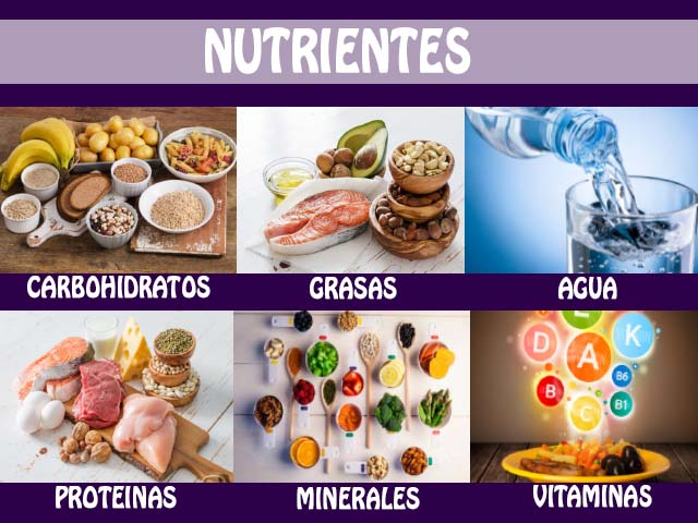 el hierro en los alimentos y sus funciones en el organismo
