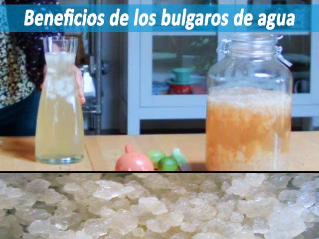 beneficios de los bulgaros de agua