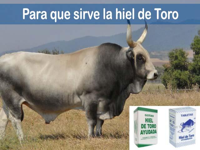 Hiel de toro: Para qué sirve y sus asombrosos beneficios medicinales