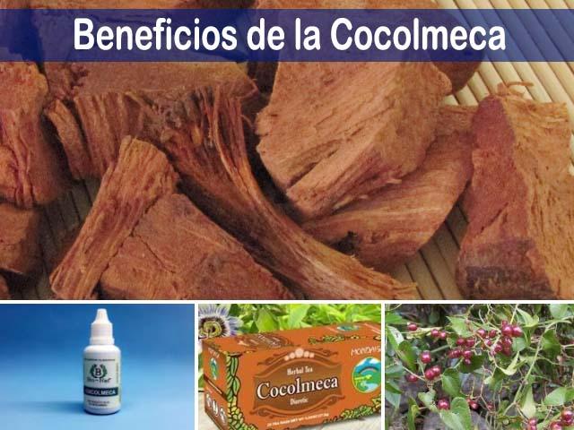 beneficios de la cocolmeca y sus propiedades