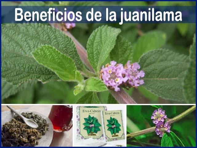 beneficios de la juanilama