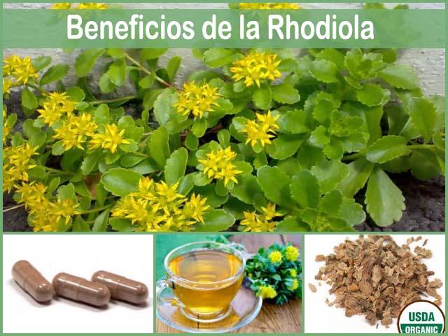 beneficios de la rhodiola