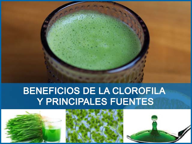 beneficios de la clorofila