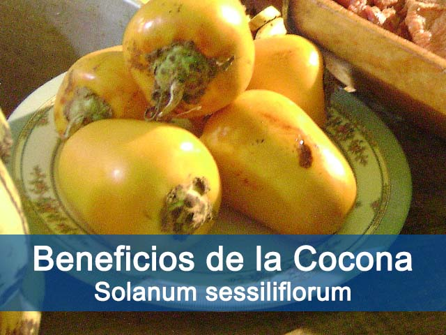 beneficios de la cocona