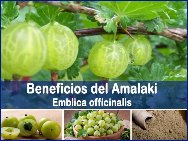 propiedades y beneficios del amalaki