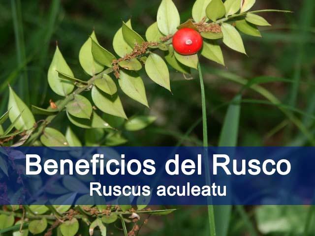 beneficios y propiedades del rusco