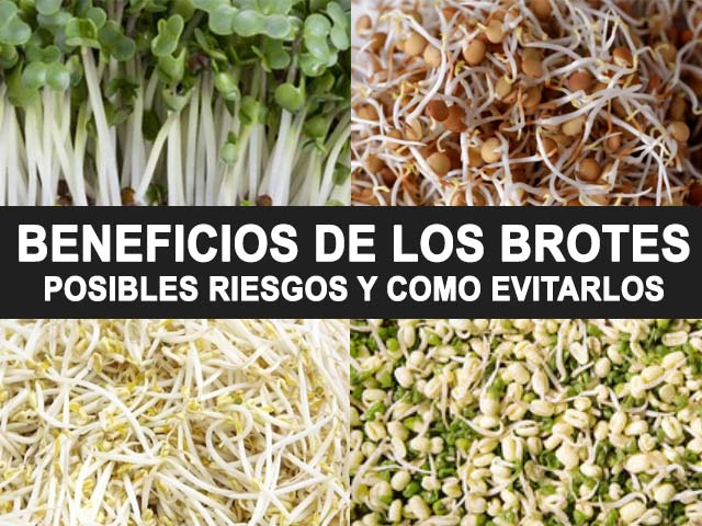 beneficios de los brotes o semillas germinadas