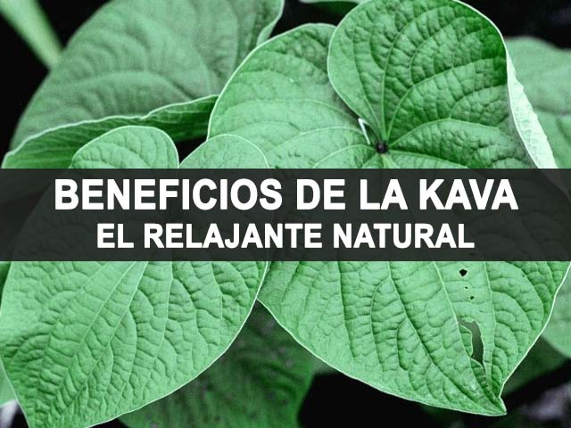 propiedades y beneficios de la kava o kawa kawa