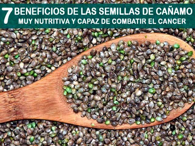 beneficios de las semillas de cañamo
